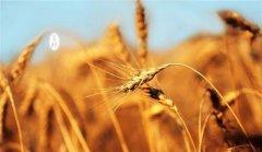 芒种丨成熟与收获同在,芒种与高考同行